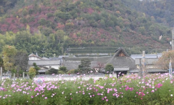 祇王寺への道01