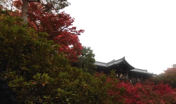東福寺・洗玉澗より